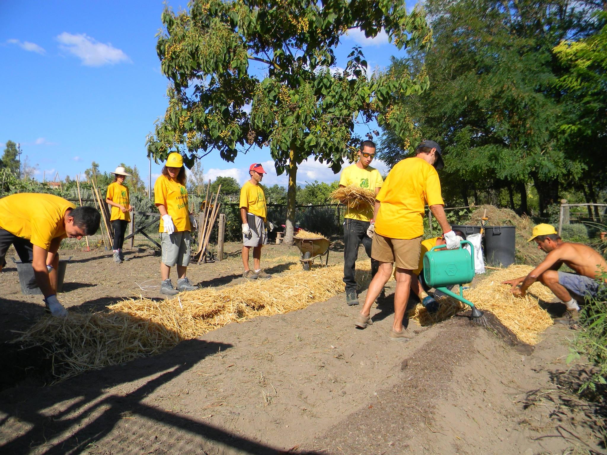 campi di volontariato